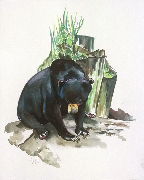 """SUN BEAR 1"" -11x14"" Original Watercolor Painting"