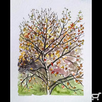 Thumbnail of Fall Calligatree