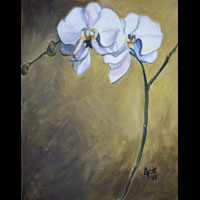 Thumbnail of White Orchids